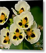 Spring Color Metal Print