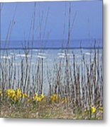 Spring Comes To The Cape Metal Print