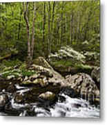 Spring Dogwoods On The Little River - D003829 Metal Print