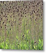 Spring Field Metal Print