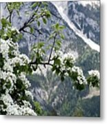 Spring In Alps Metal Print by Sola Deo Gloria