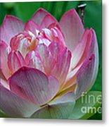 Spring Lotus-08 Metal Print