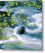 Spring Middle Prong Little River Metal Print