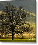 Spring Morning In Cades Cove - D003803a Metal Print