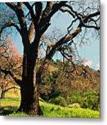 Spring Oak Metal Print by Kathy Yates