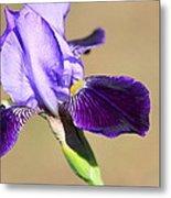 Spring Purple Metal Print