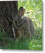 Spring Rabbit Metal Print