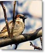 Spring Sparrow Set 1 Metal Print