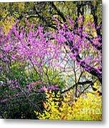 Spring Trees In San Antonio Metal Print