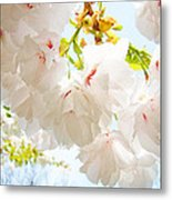 Spring White Pink Tree Flower Blossoms Metal Print