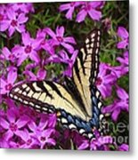 Spring's Beauty Metal Print by Crystal Joy Photography