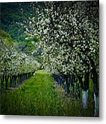 Springtime In The Orchard II Metal Print