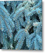 Spruce Conifer Nature Art Prints Trees Metal Print