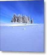 Spruce Grove In Winter Metal Print