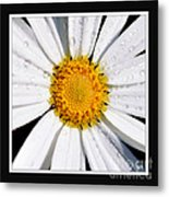 Square Daisy - Close Up 2 Metal Print