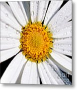 Square Daisy - Close Up Metal Print