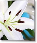 Square Lily On Blue Metal Print