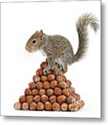 Squirrel And Nut Pyramid Metal Print