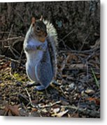 Squirrel At Base Of Tree - C2074b Metal Print