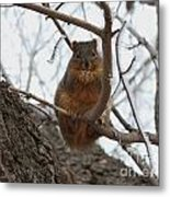 Squirrel Eating In The Frost Metal Print