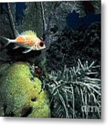 Squirrel Fish Metal Print