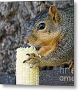 Squirrel Holding Corn Metal Print