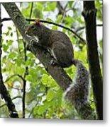 Squirrel I Metal Print