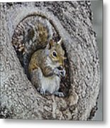 Squirrel In A Knot Metal Print