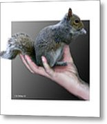 Squirrel In Hand Metal Print