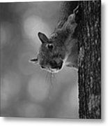 Squirrel On A Tree Metal Print