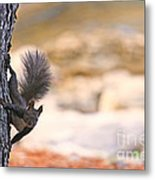 Squirrel Sitting On The Tree  Metal Print