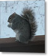 Squirrel Snack Metal Print