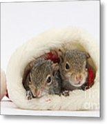 Squirrels In Santa Hat Metal Print