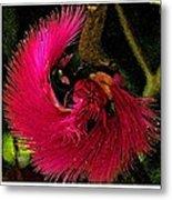 St Kitts Flora Metal Print