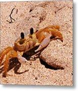 St. Lucia Crab On Beach Metal Print