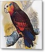 St Vincent Amazon Parrot Metal Print
