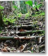 Stairs In The Forest Metal Print by Jenny Senra Pampin