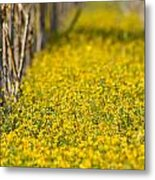 Stalks And Sunshine Metal Print