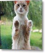 Standing Cat Metal Print