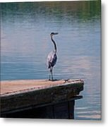 Standing On The Dock Metal Print