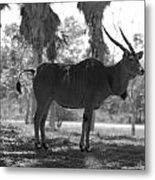 Standing Tall In Black And White Metal Print