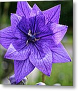Star Balloon Flower Metal Print