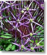 Star Flowers Metal Print