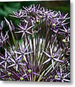 Star Of Persia Metal Print