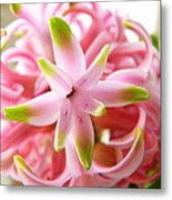 Star Of The Show Hyacinth  Metal Print