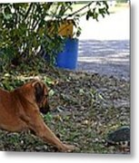 Starch Thows Legs Out Metal Print