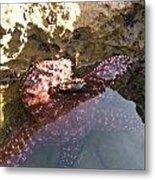 Starfish Ca Tidepools Metal Print