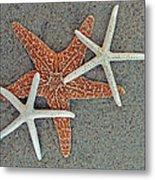 Starfish Three Metal Print by Sandi OReilly