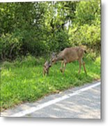 Stay Off The Road Bambi Metal Print