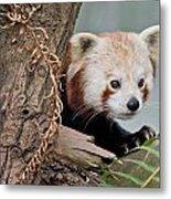 Stealthy Red Panda Metal Print